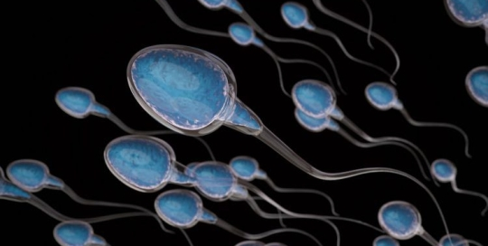 What affects male fertility
