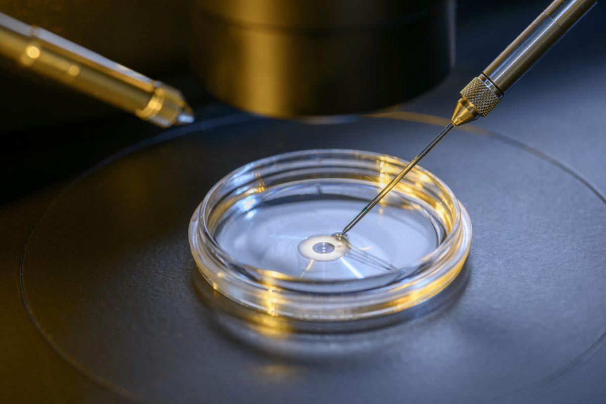IVF lab